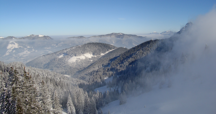 Mountain with pine forest covered in snow, blue sky below, and mist on the right