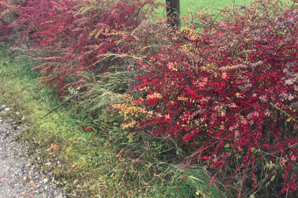 autumn-coloured-bush-cdp-award