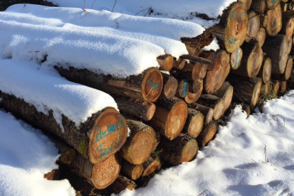 Logs covered with snow