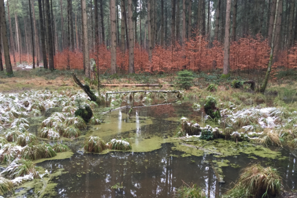 Puddle in forest with melting snow