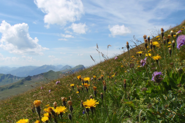 Flowers in mountain field during spring, with blue sky