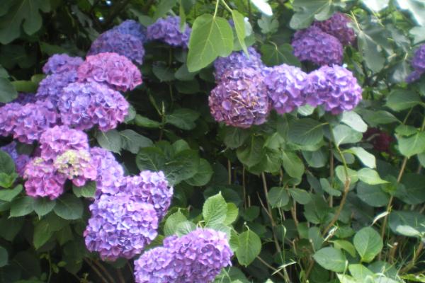 focus on blue and purple flowers