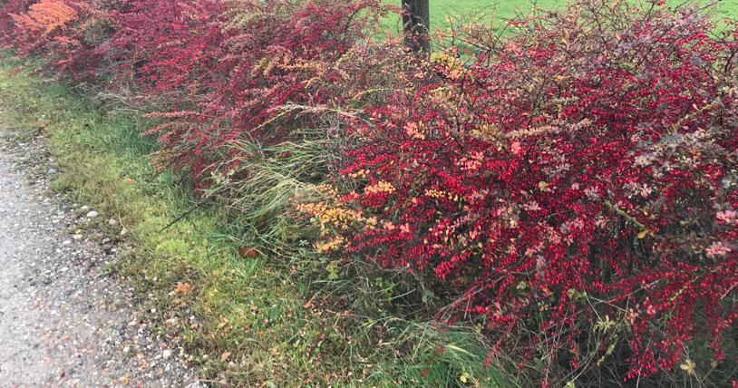 autumn-coloured-bush-cdp-award