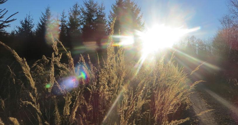 winter-forest-sun