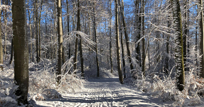 picture of a snowy forest illustrating the blog entry about Partnership WEC and DFGE