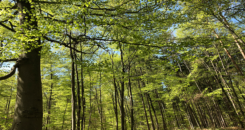 picture of a forest illustrating the blog article about the white paper CSR and Artificial intelligence and the NLP technique