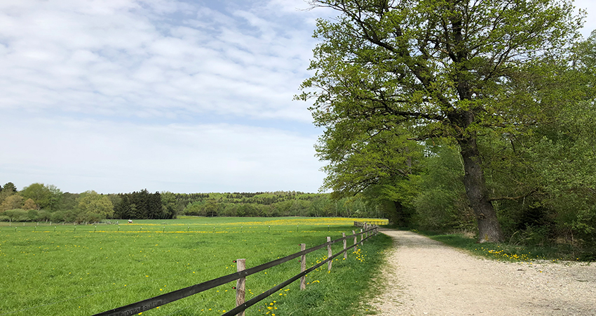 picture showing a field with forests in the background visualizing the blog article about CDP supply chain 2019
