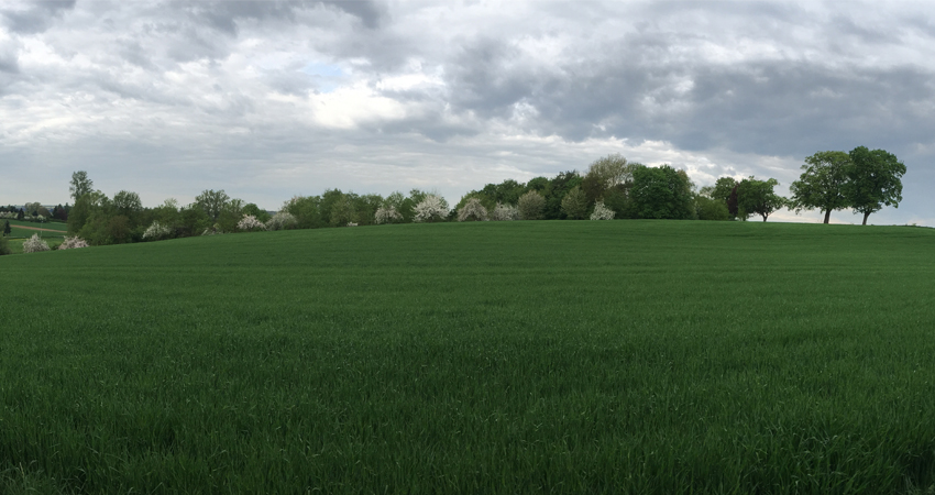 picture of a wide green field visualizing the blog article about the DJSI CSA