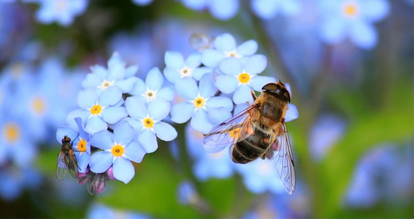 Blog_Spring_Biene_WED
