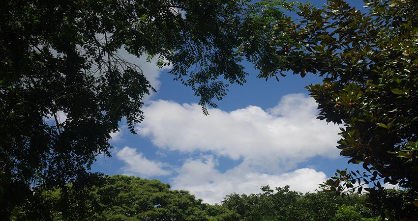 Ein Bild das Wolken, fotografiert aus einem Wald aus, zeigt. Verbildlichung des Blog Artikels Die Integrierte Klimastrategie