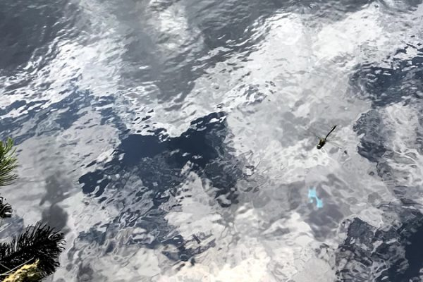picture of a dragonfly flying over water illustrating the blog article about the climate strategy tool
