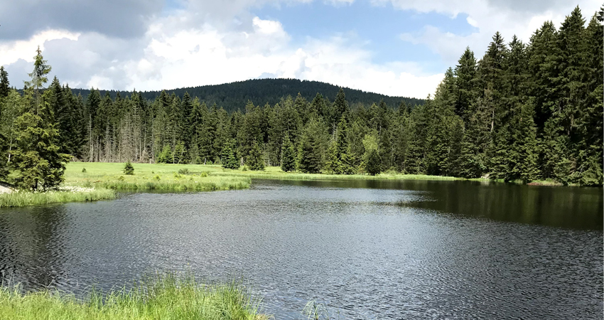 image of a lake in front of a forest visualizing the blog article about the green deal for europe