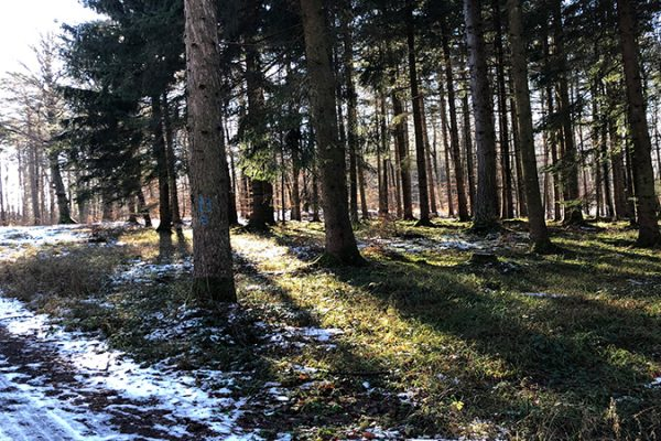 winter forest as visual for the blog post about NQC Self-Assessment-Questionnaire (SAQ)