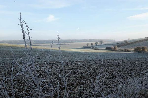 picture of a field in the early winter visualizing the blog article DFGE CDP Webinar 2019