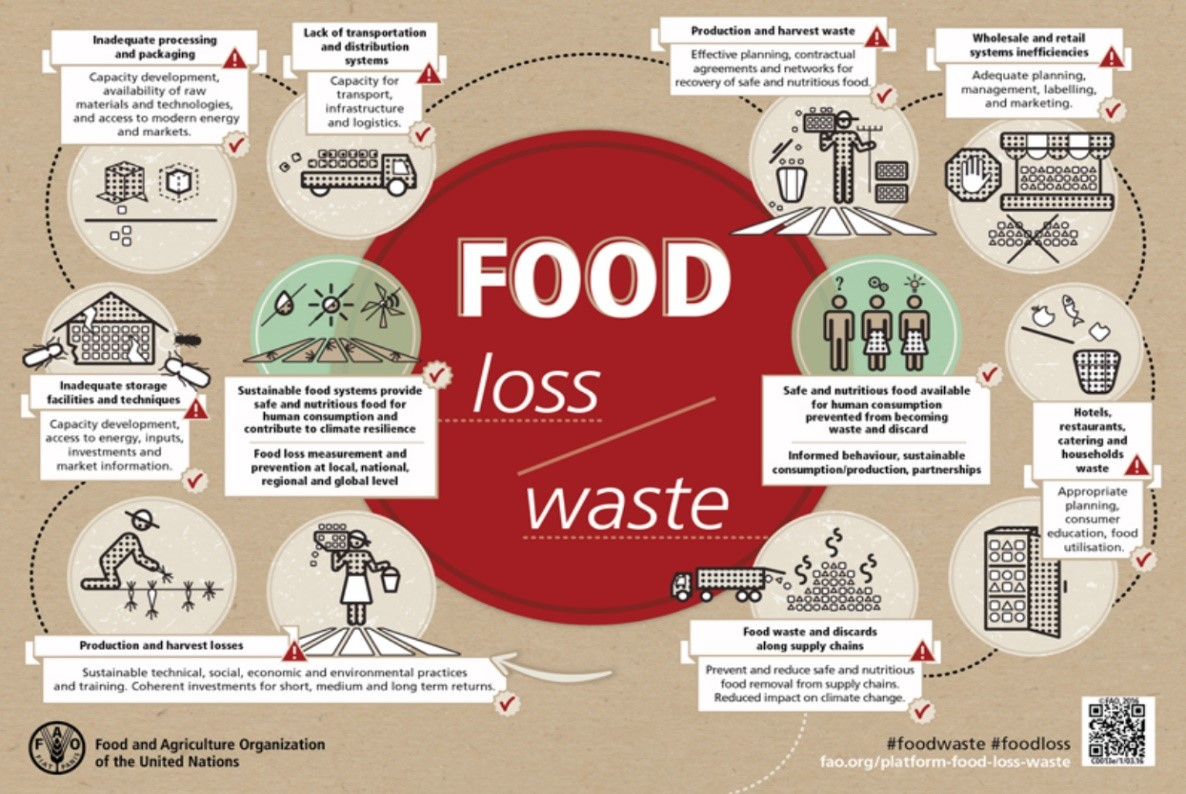 a graphic showing food loss and food waste process