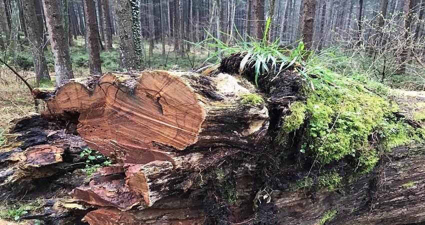 cut-tree