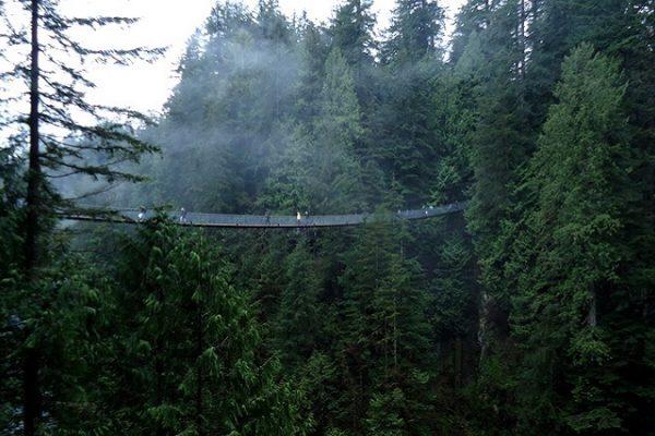Rope bridge between trees