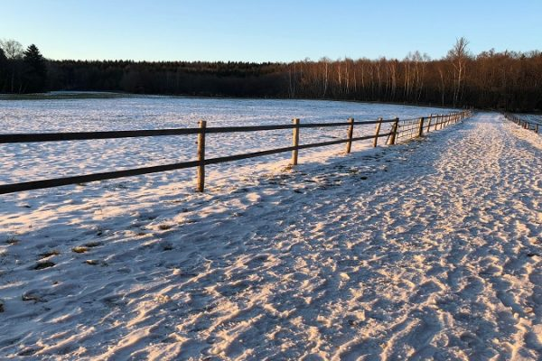 picture of a field in winter visualizing the article about sharing economy