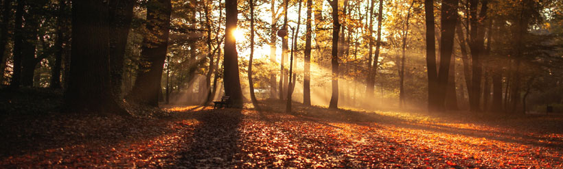 autumn sun in forest as a visualization for CDP science based targets partnership