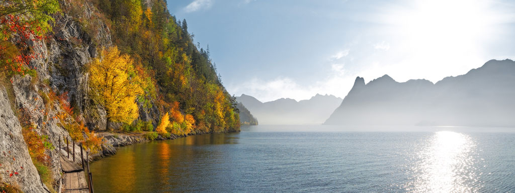 header_wec_dfge_webinar_autumn_forest