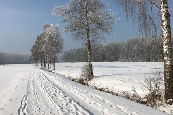 picture of snowy row of trees illustrating the article about Nachhaltige urbane ressourcenkreisläufe
