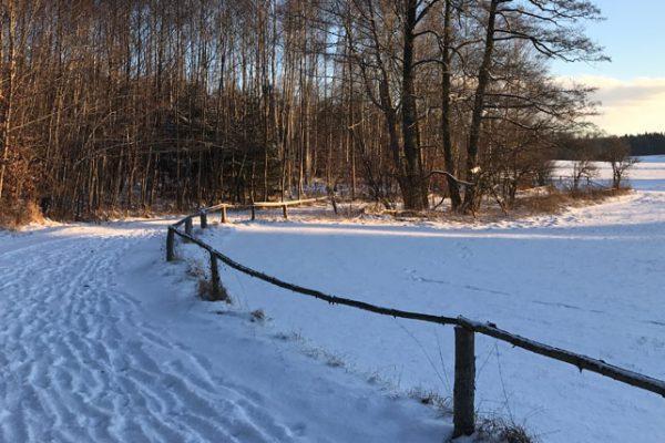 winter-field